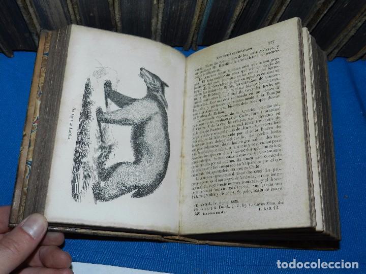 Libros antiguos: (MF) OBRAS COMPLETAS DE BUFFON , COMPLETA 35 VOLUMENES , MADRID 1847 - HISTORIA NATURAL - Foto 8 - 91440780