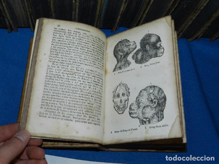 Libros antiguos: (MF) OBRAS COMPLETAS DE BUFFON , COMPLETA 35 VOLUMENES , MADRID 1847 - HISTORIA NATURAL - Foto 9 - 91440780