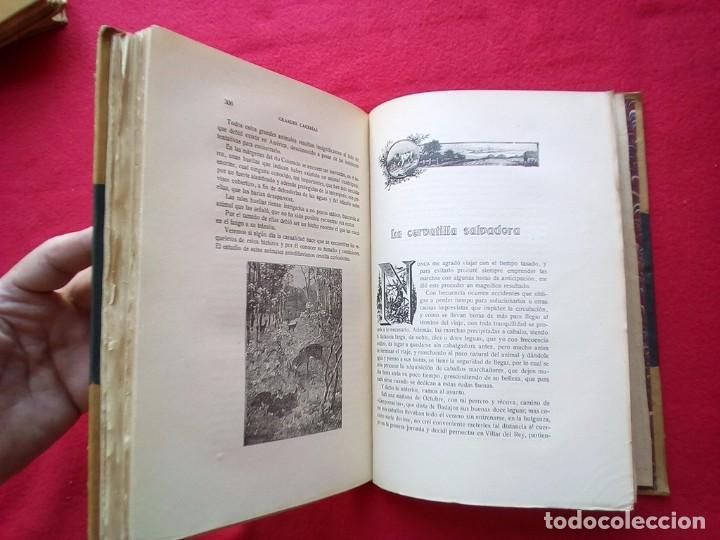 Libros antiguos: 1910 CAZA NARRACIONES DE UN MONTERO GRANDES CACERIAS ESPAÑOLAS CINEGETICA 3 TOMOS 26 CMS - Foto 24 - 91607390