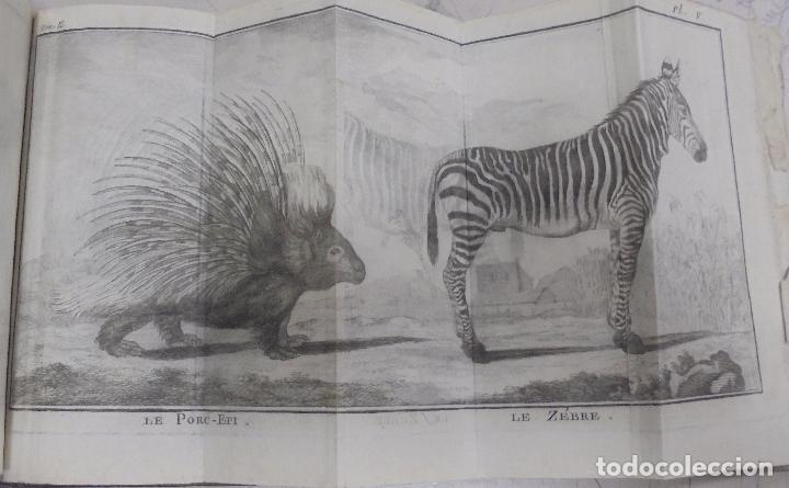 Libros antiguos: CURSO DE HISTORIA NATURAL. TOMO SEGUNDO. 1770. PARIS. GRABADOS. CHEZ DESAINT. LEER. VER - Foto 7 - 96486427