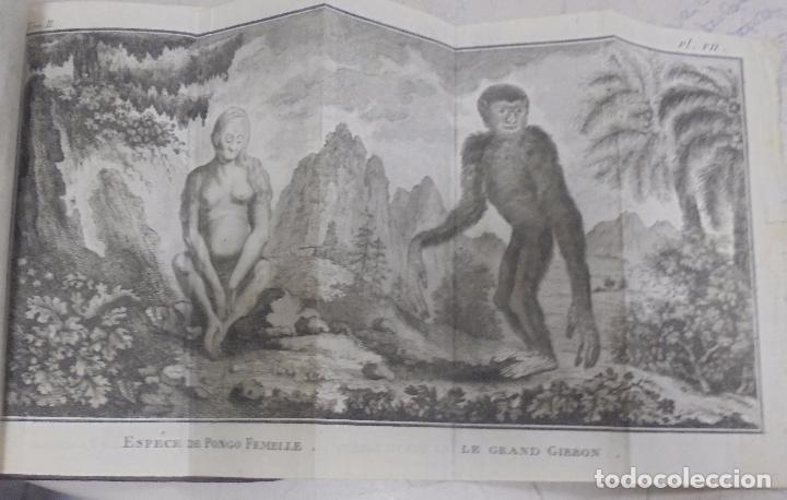 Libros antiguos: CURSO DE HISTORIA NATURAL. TOMO SEGUNDO. 1770. PARIS. GRABADOS. CHEZ DESAINT. LEER. VER - Foto 8 - 96486427