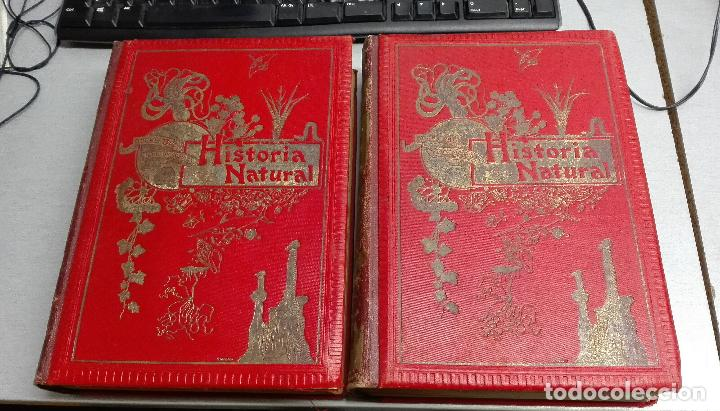 HISTORIA NATURAL / ODON DE BUEN / 2 TOMOS / MANUEL SOLER - BARCELONA FINALES SIGLO XIX (Libros Antiguos, Raros y Curiosos - Ciencias, Manuales y Oficios - Otros)