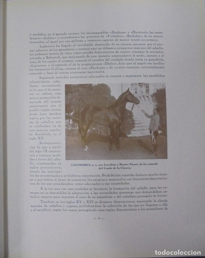 Libros antiguos: RECOPILACION DE ESTUDIOS DE CRIA CABALLAR. EJEMPLAR NUMERADO. 1931. JEREZ. ILUSTRADO. LEER - Foto 5 - 99517851