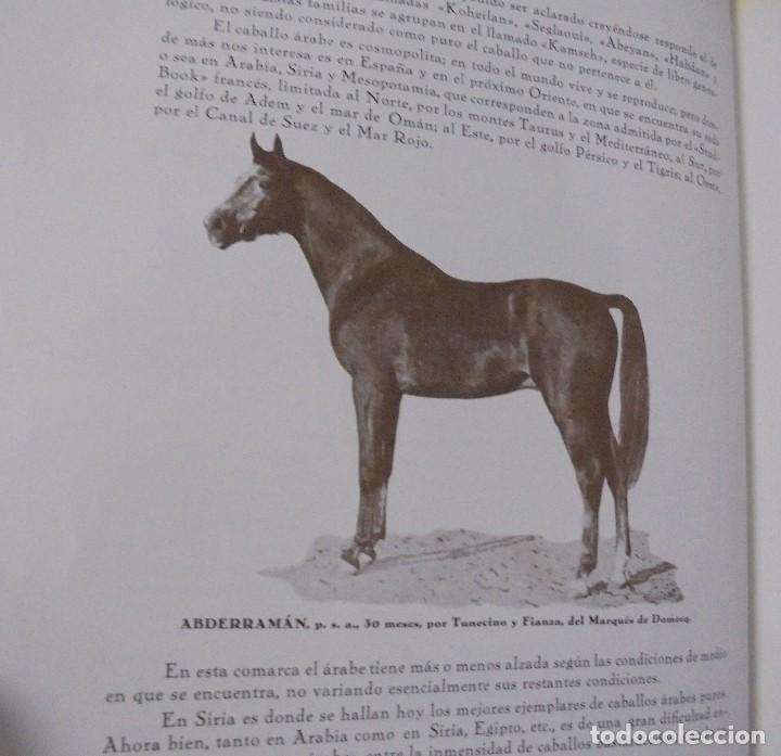 Libros antiguos: RECOPILACION DE ESTUDIOS DE CRIA CABALLAR. EJEMPLAR NUMERADO. 1931. JEREZ. ILUSTRADO. LEER - Foto 7 - 99517851