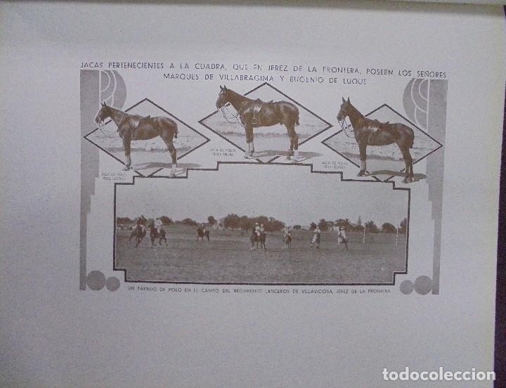 Libros antiguos: RECOPILACION DE ESTUDIOS DE CRIA CABALLAR. EJEMPLAR NUMERADO. 1931. JEREZ. ILUSTRADO. LEER - Foto 8 - 99517851
