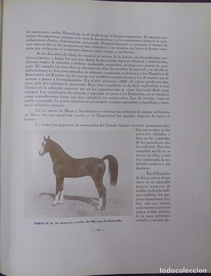 Libros antiguos: RECOPILACION DE ESTUDIOS DE CRIA CABALLAR. EJEMPLAR NUMERADO. 1931. JEREZ. ILUSTRADO. LEER - Foto 9 - 99517851