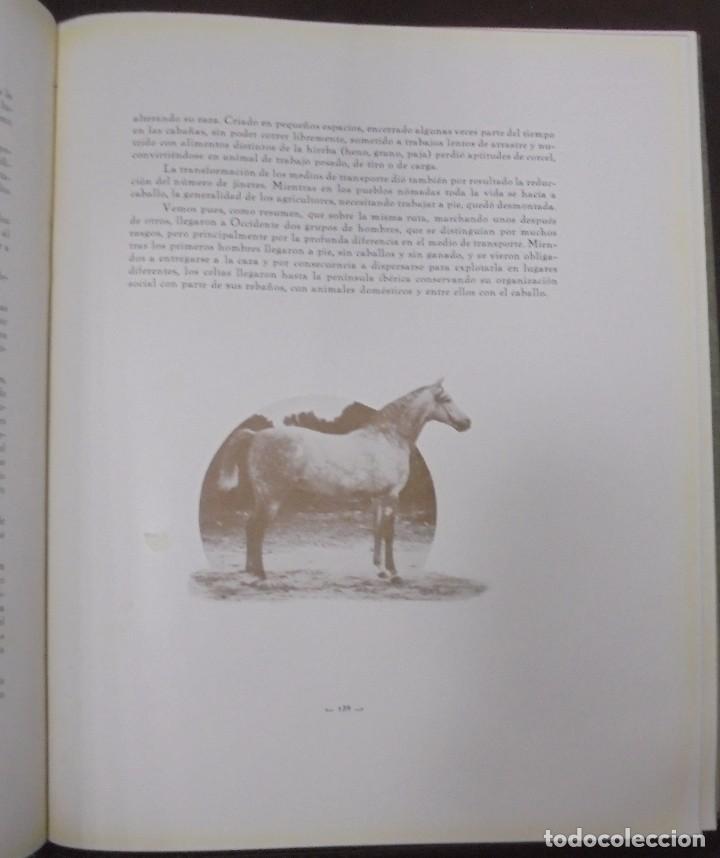 Libros antiguos: RECOPILACION DE ESTUDIOS DE CRIA CABALLAR. EJEMPLAR NUMERADO. 1931. JEREZ. ILUSTRADO. LEER - Foto 10 - 99517851