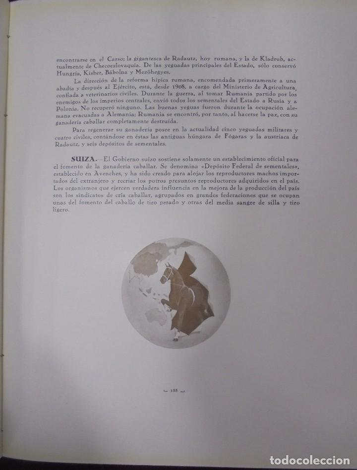 Libros antiguos: RECOPILACION DE ESTUDIOS DE CRIA CABALLAR. EJEMPLAR NUMERADO. 1931. JEREZ. ILUSTRADO. LEER - Foto 11 - 99517851