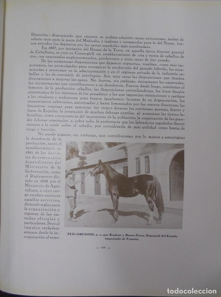 Libros antiguos: RECOPILACION DE ESTUDIOS DE CRIA CABALLAR. EJEMPLAR NUMERADO. 1931. JEREZ. ILUSTRADO. LEER - Foto 13 - 99517851