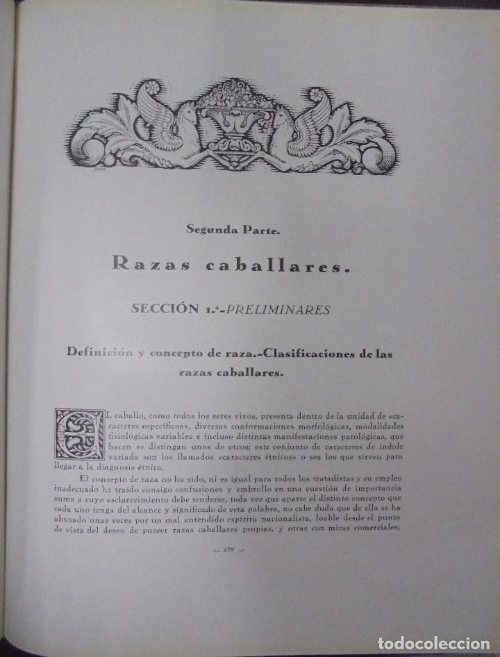Libros antiguos: RECOPILACION DE ESTUDIOS DE CRIA CABALLAR. EJEMPLAR NUMERADO. 1931. JEREZ. ILUSTRADO. LEER - Foto 14 - 99517851