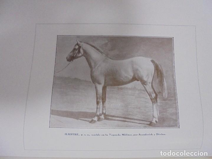 Libros antiguos: RECOPILACION DE ESTUDIOS DE CRIA CABALLAR. EJEMPLAR NUMERADO. 1931. JEREZ. ILUSTRADO. LEER - Foto 15 - 99517851