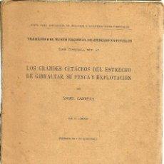 Libros antiguos: LOS GRANDES CETÁCEOS DEL ESTRECHO DE GIBRALTAR , SU PESCA Y EXPLOTACIÓN. POR ÁNGEL CABRERA. 1925. Lote 109575807