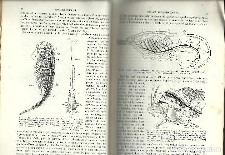 Libros antiguos: TRAITÉ DE ZOOLOGIE. PAR G. MOQUIN-TANDON - Foto 2 - 111265987