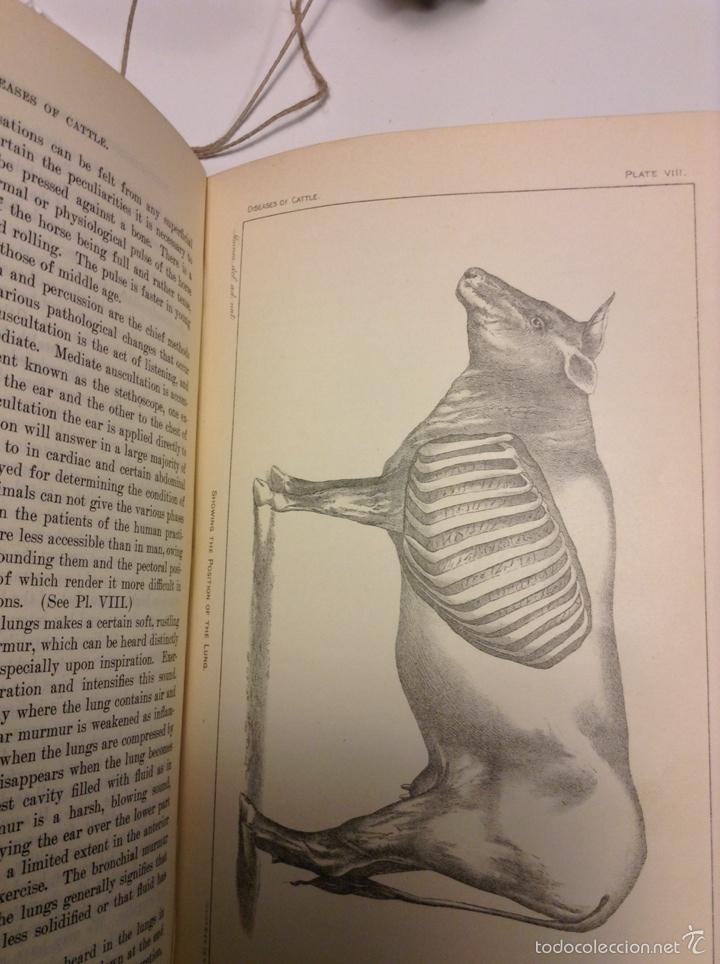 Libros antiguos: Special report on diseases of cattle. 1912. Veterinaria. Ganadería. Agricultura - Foto 2 - 112145187