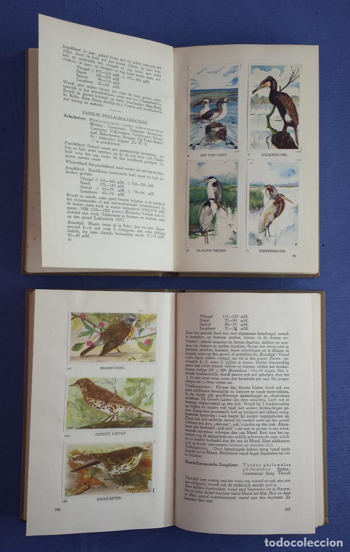 Libros antiguos: Libro holandes, Hoe heet die Vogel, Jan P. Strybos, 2 libros (cada uno con 110 imagenes), 1927 - Foto 8 - 117242231