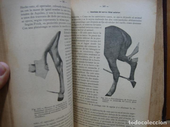Libros antiguos: Compendio de cirugía veterinaria 1916 - Foto 7 - 117446943