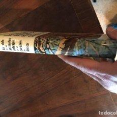 Libros antiguos: LA VIDA DE LOS ANIMALES SALVAJES EN AL CORAZON DE AFRICA. Lote 119902303