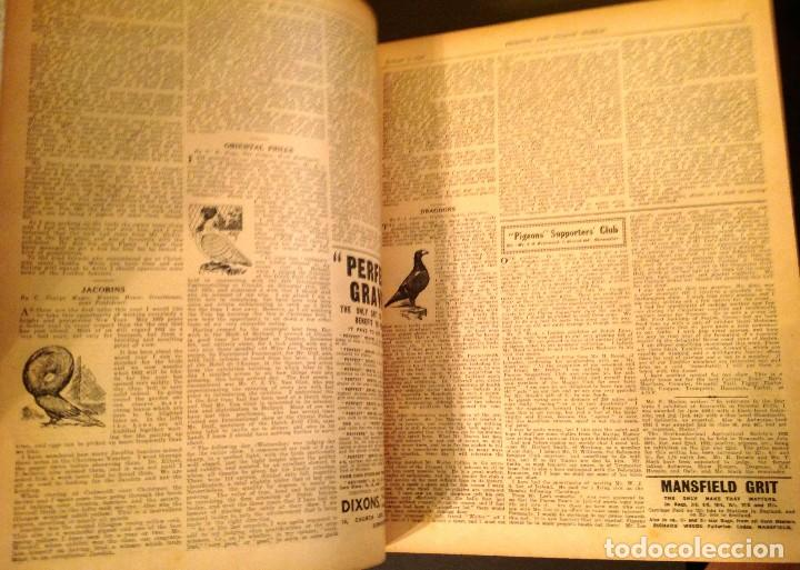 Libros antiguos: Pigeons Illustrated JAN.- DEC VOL,39 Año 1932 - Foto 4 - 125326195