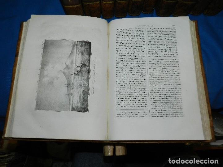 Libros antiguos: (MF) CONDE DE BUFFON - HISTORIA NATURAL GENERAL ,13 TOMOS COMPLETA MADRID 1844 IMP. VICENTE FROSSART - Foto 5 - 125950511