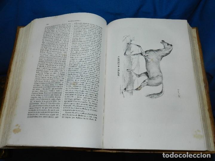 Libros antiguos: (MF) CONDE DE BUFFON - HISTORIA NATURAL GENERAL ,13 TOMOS COMPLETA MADRID 1844 IMP. VICENTE FROSSART - Foto 7 - 125950511