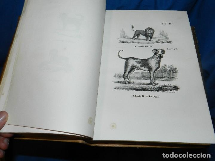 Libros antiguos: (MF) CONDE DE BUFFON - HISTORIA NATURAL GENERAL ,13 TOMOS COMPLETA MADRID 1844 IMP. VICENTE FROSSART - Foto 8 - 125950511