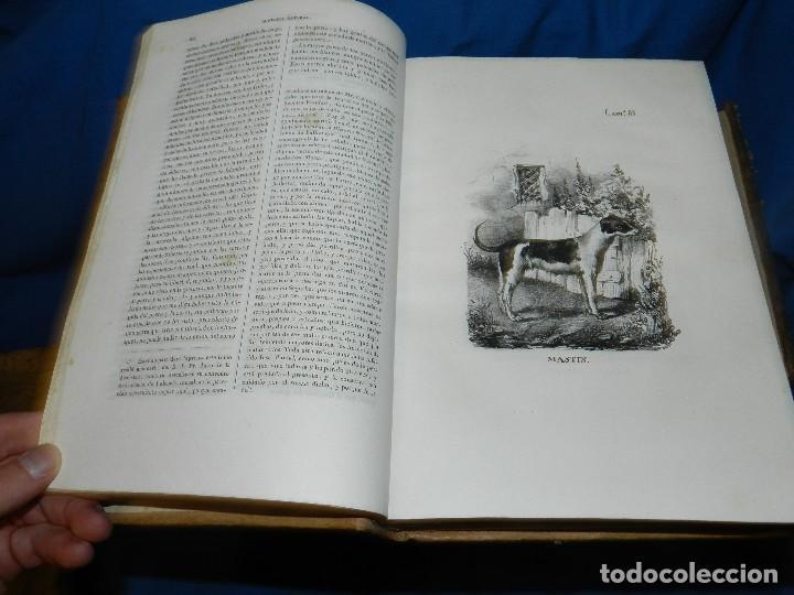 Libros antiguos: (MF) CONDE DE BUFFON - HISTORIA NATURAL GENERAL ,13 TOMOS COMPLETA MADRID 1844 IMP. VICENTE FROSSART - Foto 9 - 125950511