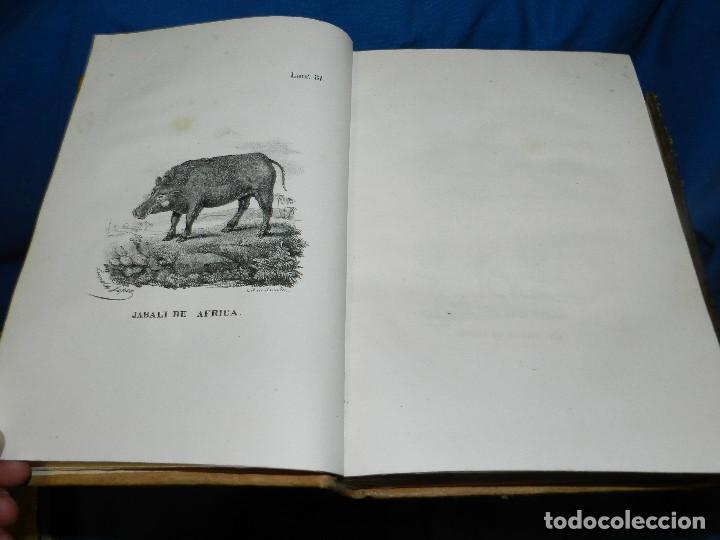 Libros antiguos: (MF) CONDE DE BUFFON - HISTORIA NATURAL GENERAL ,13 TOMOS COMPLETA MADRID 1844 IMP. VICENTE FROSSART - Foto 10 - 125950511