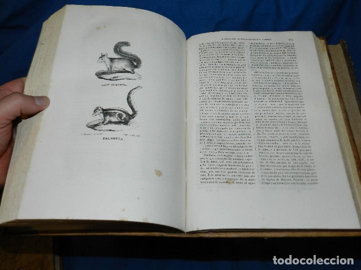 Libros antiguos: (MF) CONDE DE BUFFON - HISTORIA NATURAL GENERAL ,13 TOMOS COMPLETA MADRID 1844 IMP. VICENTE FROSSART - Foto 11 - 125950511