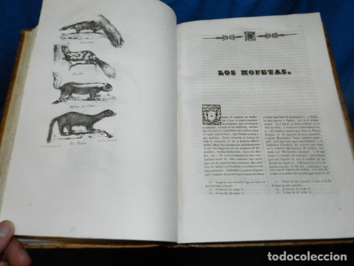 Libros antiguos: (MF) CONDE DE BUFFON - HISTORIA NATURAL GENERAL ,13 TOMOS COMPLETA MADRID 1844 IMP. VICENTE FROSSART - Foto 12 - 125950511