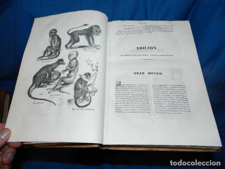 Libros antiguos: (MF) CONDE DE BUFFON - HISTORIA NATURAL GENERAL ,13 TOMOS COMPLETA MADRID 1844 IMP. VICENTE FROSSART - Foto 14 - 125950511
