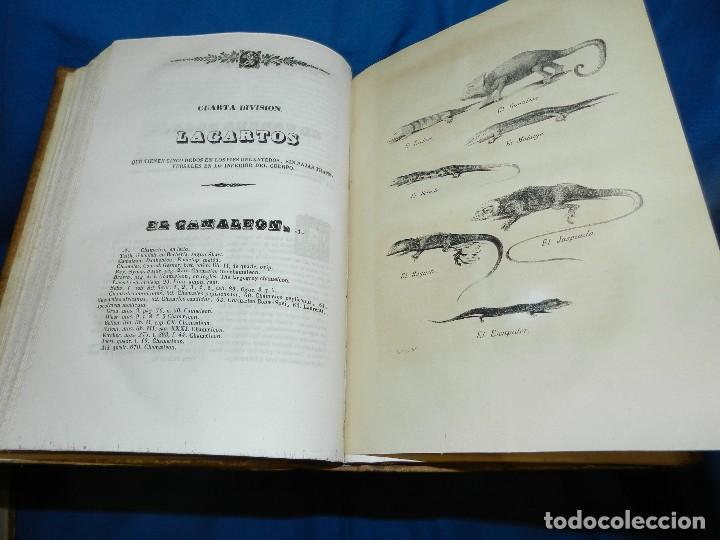 Libros antiguos: (MF) CONDE DE BUFFON - HISTORIA NATURAL GENERAL ,13 TOMOS COMPLETA MADRID 1844 IMP. VICENTE FROSSART - Foto 15 - 125950511