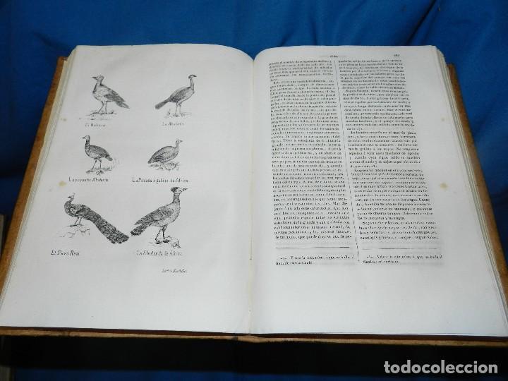 Libros antiguos: (MF) CONDE DE BUFFON - HISTORIA NATURAL GENERAL ,13 TOMOS COMPLETA MADRID 1844 IMP. VICENTE FROSSART - Foto 16 - 125950511