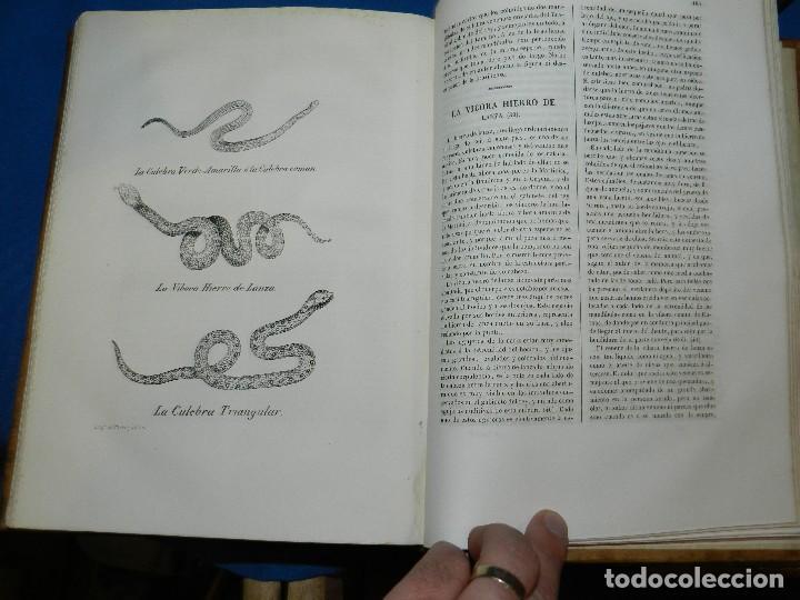 Libros antiguos: (MF) CONDE DE BUFFON - HISTORIA NATURAL GENERAL ,13 TOMOS COMPLETA MADRID 1844 IMP. VICENTE FROSSART - Foto 18 - 125950511