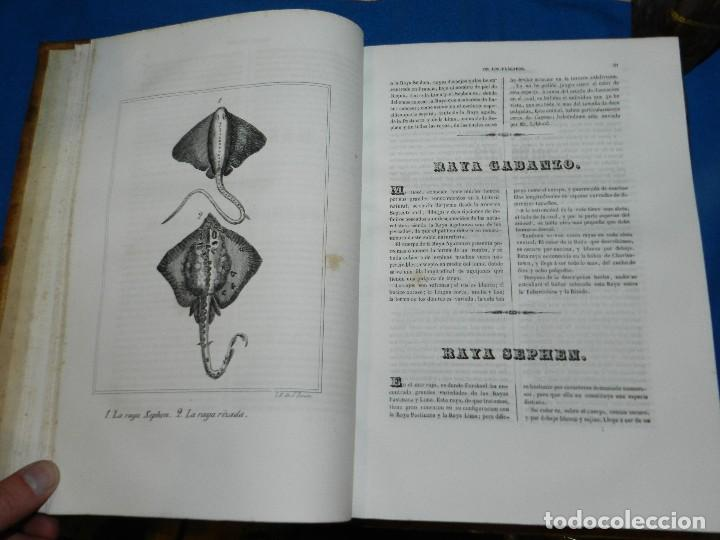 Libros antiguos: (MF) CONDE DE BUFFON - HISTORIA NATURAL GENERAL ,13 TOMOS COMPLETA MADRID 1844 IMP. VICENTE FROSSART - Foto 19 - 125950511