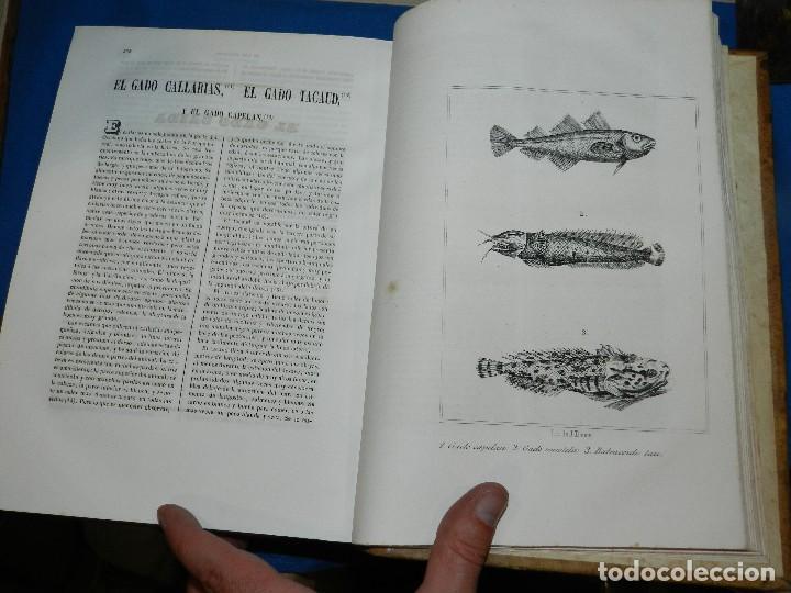Libros antiguos: (MF) CONDE DE BUFFON - HISTORIA NATURAL GENERAL ,13 TOMOS COMPLETA MADRID 1844 IMP. VICENTE FROSSART - Foto 20 - 125950511