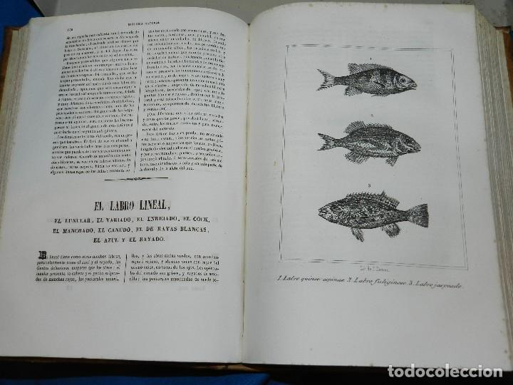 Libros antiguos: (MF) CONDE DE BUFFON - HISTORIA NATURAL GENERAL ,13 TOMOS COMPLETA MADRID 1844 IMP. VICENTE FROSSART - Foto 21 - 125950511