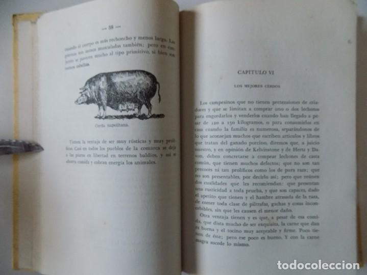 Libros antiguos: LIBRERIA GHOTICA. PIO REVENGA. CRIA LUCRATIVA DE EL CERDO.1953. ILUSTRADO CON GRABADOS. - Foto 2 - 195080948