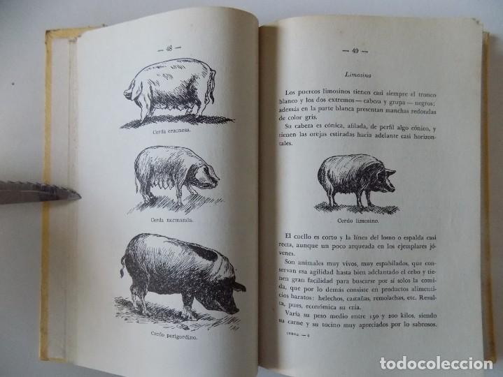 Libros antiguos: LIBRERIA GHOTICA. PIO REVENGA. CRIA LUCRATIVA DE EL CERDO.1953. ILUSTRADO CON GRABADOS. - Foto 3 - 195080948