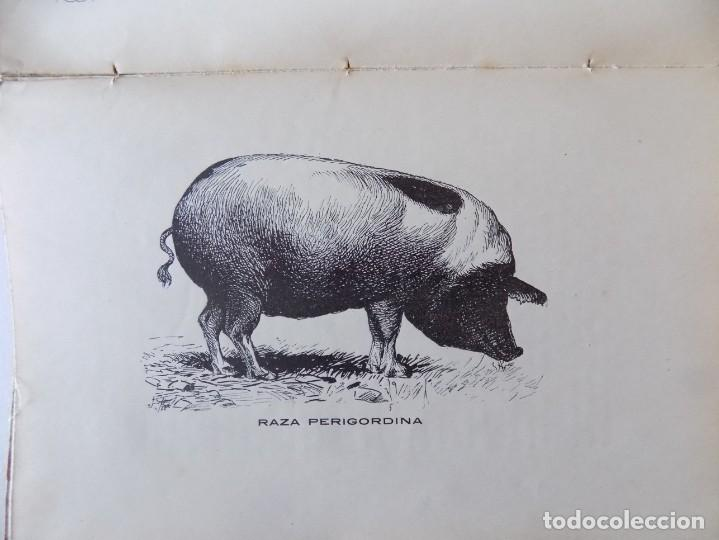Libros antiguos: LIBRERIA GHOTICA. RAFAEL SALAVERA Y TRIAS. EL CERDO.TRATADO COMPLETO DE SALCHICHERIA. 1913.GRABADOS - Foto 2 - 136015382