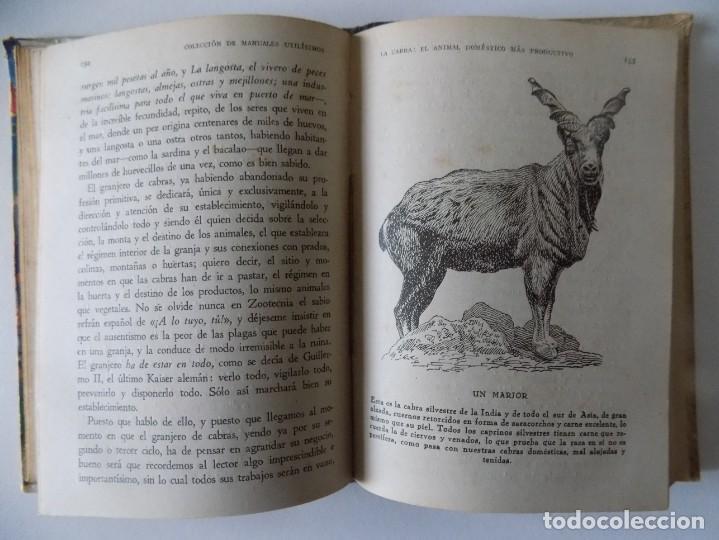 Libros antiguos: LIBRERIA GHOTICA. FERNANDO ALBURQUERQUE. LA CABRA.EL ANIMAL DOMÉSTICO MÁS PRODUCTIVO.1946.ILUSTRADO - Foto 3 - 136018810