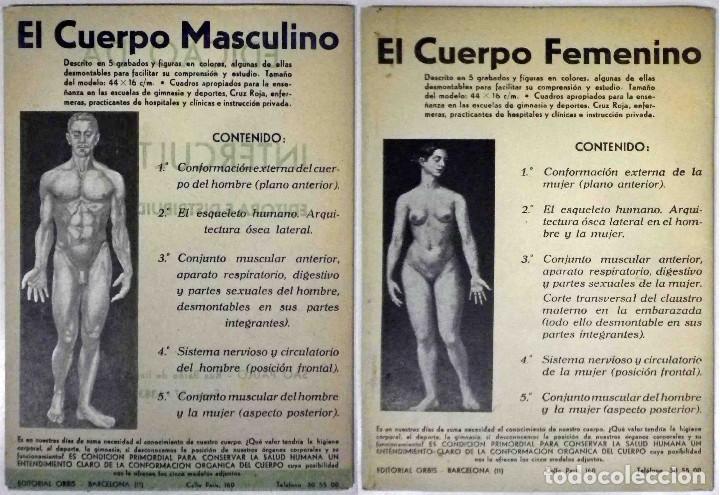 EL CUERPO MASCULINO Y EL CUERPO FEMENINO - EDITORIAL ORBIS, 1920 - COMPLETOS. (Libros Antiguos, Raros y Curiosos - Ciencias, Manuales y Oficios - Otros)