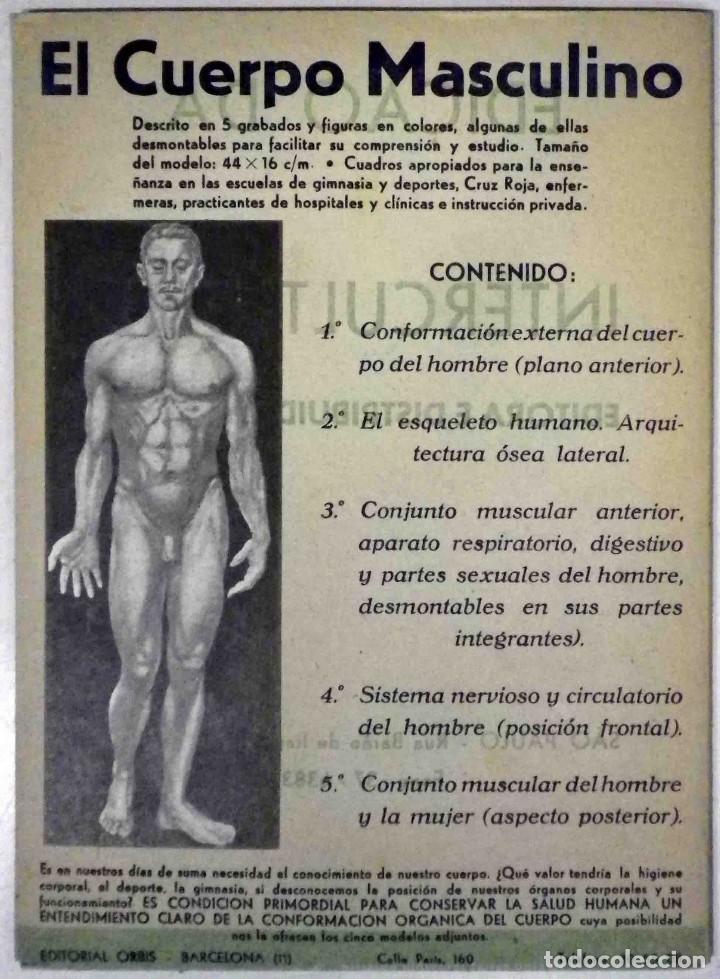 Libros antiguos: El cuerpo masculino y el cuerpo femenino - Editorial Orbis, 1920 - Completos. - Foto 2 - 140751742