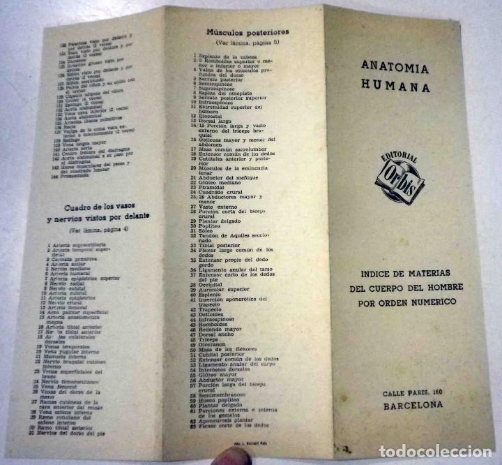 Libros antiguos: El cuerpo masculino y el cuerpo femenino - Editorial Orbis, 1920 - Completos. - Foto 3 - 140751742