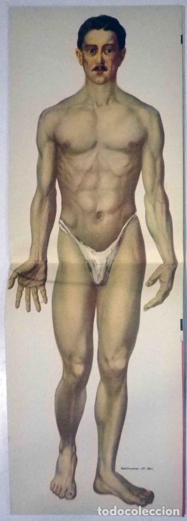 Libros antiguos: El cuerpo masculino y el cuerpo femenino - Editorial Orbis, 1920 - Completos. - Foto 5 - 140751742