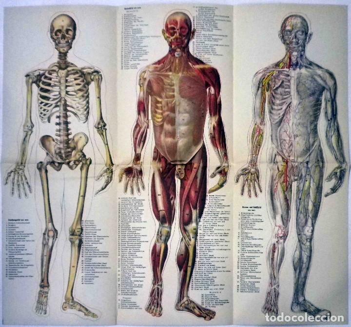 Libros antiguos: El cuerpo masculino y el cuerpo femenino - Editorial Orbis, 1920 - Completos. - Foto 6 - 140751742