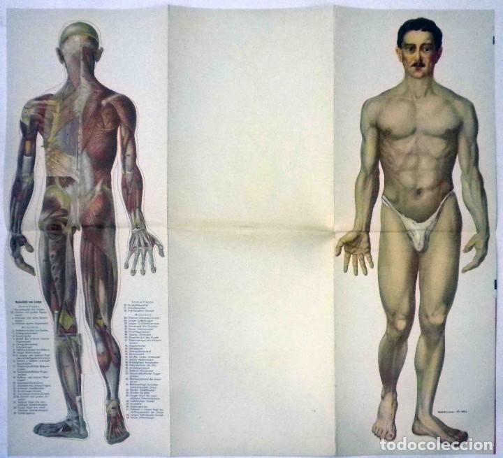 Libros antiguos: El cuerpo masculino y el cuerpo femenino - Editorial Orbis, 1920 - Completos. - Foto 8 - 140751742