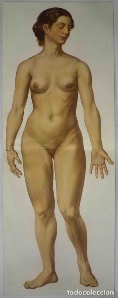 Libros antiguos: El cuerpo masculino y el cuerpo femenino - Editorial Orbis, 1920 - Completos. - Foto 10 - 140751742