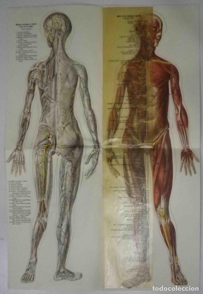 Libros antiguos: El cuerpo masculino y el cuerpo femenino - Editorial Orbis, 1920 - Completos. - Foto 11 - 140751742