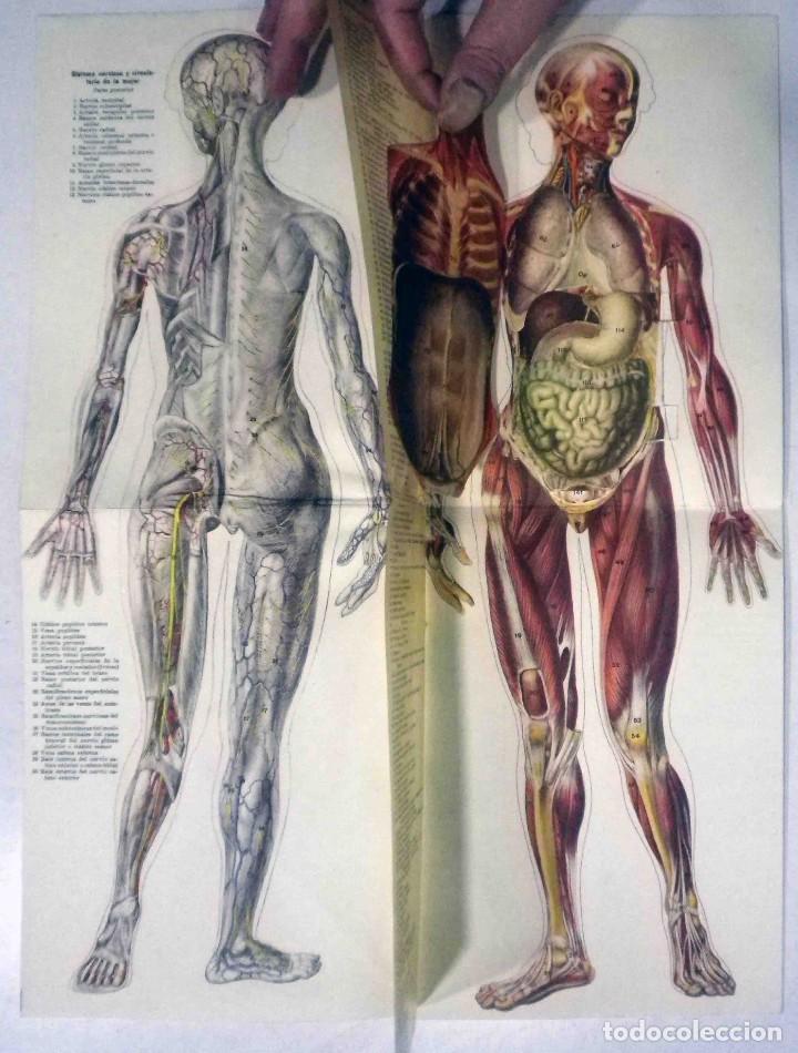 Libros antiguos: El cuerpo masculino y el cuerpo femenino - Editorial Orbis, 1920 - Completos. - Foto 12 - 140751742