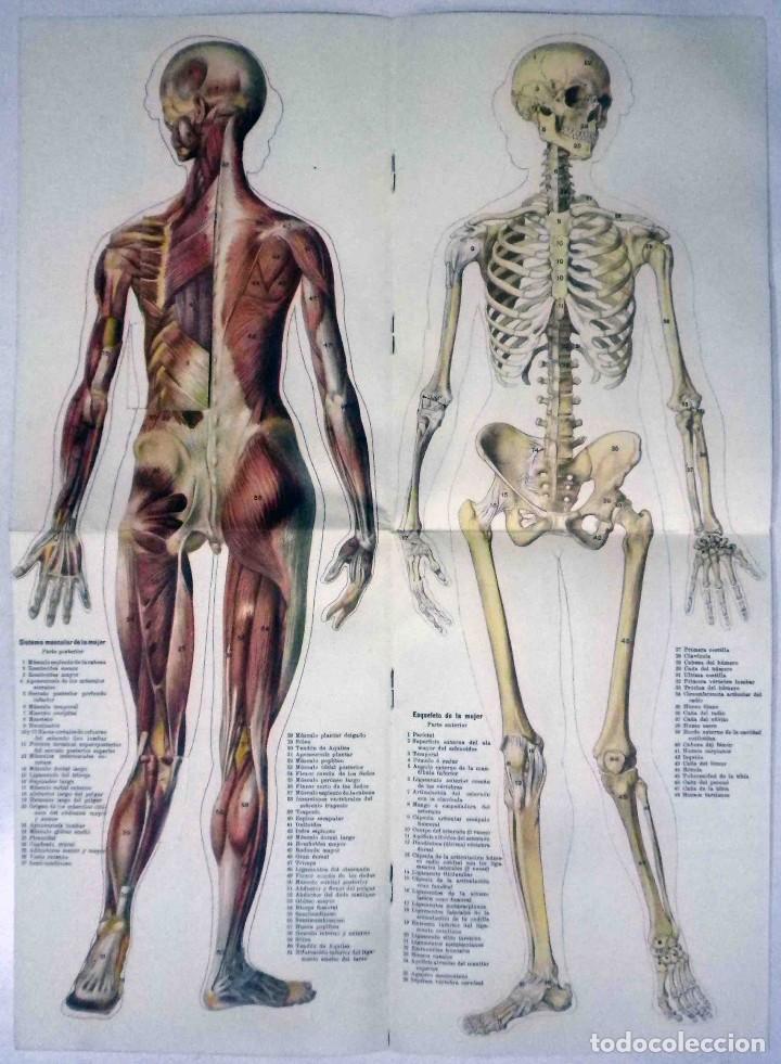 Libros antiguos: El cuerpo masculino y el cuerpo femenino - Editorial Orbis, 1920 - Completos. - Foto 13 - 140751742